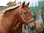 Suffolk Punch - Horse