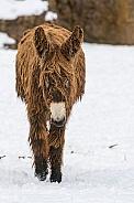Baudet Donkey