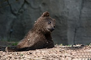 Kamtschatka Bear