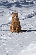 Rocket  the cat in the snow