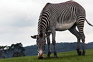 Zebra, sky background
