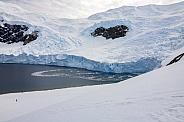 Neko Harbor Glacier - Antarctica