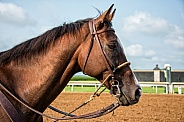 Racetrack Outrider Horse
