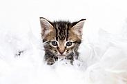 Kitten portriat