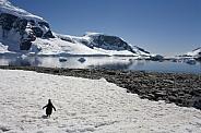 Cuverville Bay - Antarctica