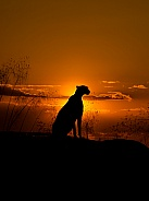 Cheetah Sunset Silhouette