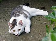 Cat on gravestone