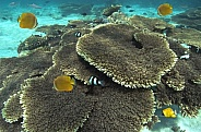 Coral Reef - French Polynesia - South Pacific