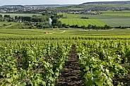 Hautvillers - France
