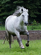 Single White Horse Running