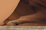 Sand Dune - Sossusvlei - Namibia