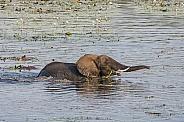 Wading Elephant