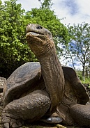 Giant Tortoise - Galapagos Islands - Ecuador