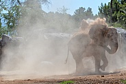 Elephant Dust Bath