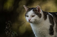 Brown andf White Cat