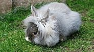 Pet Rabbit in Garden