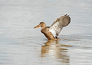 Female Shoveler Stretching