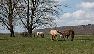 Cuddling wild horses