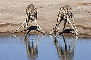 Giraffes drinking at a waterhole - Namibia
