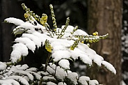 close-up view of beautiful twigs with green leaves covered with snow in forest