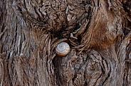 Snail in a tree tronk
