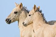 Little Wild Konik horses