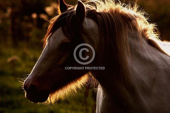 Pony Twilight