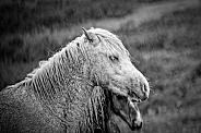Wild horse in the rain