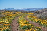 Yellow Poppy Road