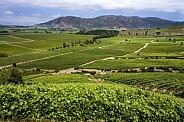 Colchagua Valley - Chile