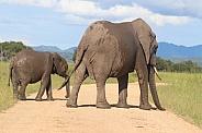 Elephant female and calf
