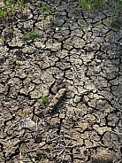 Drought - cracked earth - crop failure