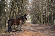 Dutch horse in forest