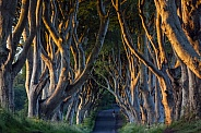 Dark Hedges - County Antrim - Northern Ireland