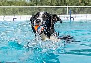 Dive Dog