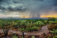 Desert Monsoon