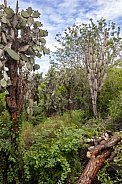 Dense foliage - Galapagos Islands