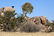 Damaraland Landscape - Namibia