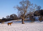 Horse in a paddock in winter