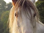 Pony close-up