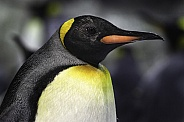 King Penguin Side Profile