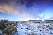 Winter Desert Landscape