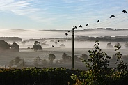 Early Morning Mist - UK