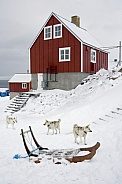 Greenland Inuit Dogs - Greenland