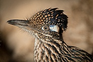 Road Runner Close Up