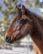 Close up profile of a Nevada wild horse