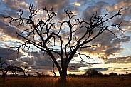 African sunset - Savuti Region of Botswana