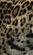 Jaguar Print Pattern