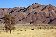 Desert landscape in Damaraland - Namibia