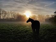 Horse in morning mist